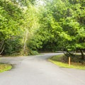 Typical campground road.- Quosatana Campground