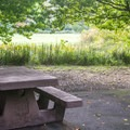 Can you find the wild turkey in this photo?- Quosatana Campground
