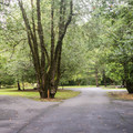 Campground road.- Quosatana Campground