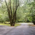 Campground road.- Quosatana Campground