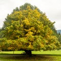 Magnificent trees in this campground.- Quosatana Campground