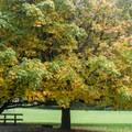 Meadows and trees abound at Quosatana.- Quosatana Campground