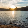 Ducks enjoying the lake.- Murphy Candler Park