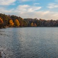 Trees lining the shore of the lake.- Murphy Candler Park
