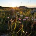 Summer brings beautiful wildflowers along this route.- Corno Grande of the Gran Sasso d'Italia