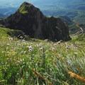 Wildflowers adorn the hillsides in summer.- Corno Grande of the Gran Sasso d'Italia