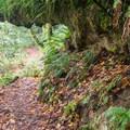 River View Trail.- River View Trail