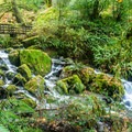 The trail meanders over several creeks.- Redwood Nature Trail