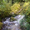 The trail never strays far from the sound of running water.- Redwood Nature Trail