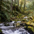 Another beautiful cascading creek.- Redwood Nature Trail