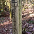 Keep alert for this obscure sign for the trail.- Thunder Rock Cove to Spruce Island Hike