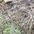 Morning dew on a spider's web.- Santa Cruz Island: Prisoner's Harbor to Scorpion Anchorage