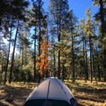 Campsites are located within a half mile from the lake.- Woods Canyon Lake