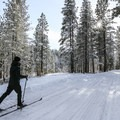 Skiing through the winter wonderland.- Sagehen Summit