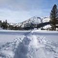Cross-country skiing Tahoe Meadows.- Tahoe Meadows: Ophir Creek