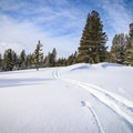 After leaving the meadow and following along the creek, you may find that there are no other tracks out there.- Tahoe Meadows: Ophir Creek