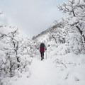 Bells Canyon Snowshoe.- Bells Canyon Snowshoe