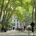 Promanade under the shadow of California sycamores (Platanus racemosa) in Bryant Park.- Bryant Park