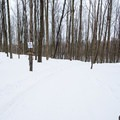 Looking down the start of the Glacier Trail.- Egypt Road Ski Trails