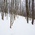 The hill at the beginning of the Glacier Trail is moderately steep.- Egypt Road Ski Trails