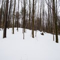 An open hardwood forest surrounds the Glacier Trail.- Egypt Road Ski Trails