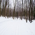 An early portion of the Rim Trail.- Egypt Road Ski Trails