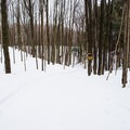 Looking down into Gully 2.- Egypt Road Ski Trails