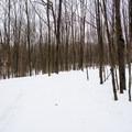 The Rim Trail is a good beginner trail.- Egypt Road Ski Trails
