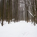 Views into the Easy Loop near Sun Fields.- Skyfields Ski Trails