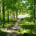 A trail to the river near the put-in.- Black River: Lyons Falls to Beeches Landing