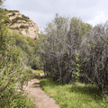 Continuing on the Mishe Mokwa Trail.- Sandstone Peak, Circle X Ranch