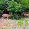 There is a very high chance of seeing wildlife on this trail.- East Rim Trail to Cable Mountain