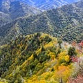 Colorful leaves settle in over the Smoky Mountains in the fall.- Chimney Tops