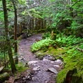 The old-growth forests that surround this trail are very dense and peaceful.- Chimney Tops