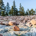 Pink granite boulders on Otter Point, Acadia National Park.- Otter Point + Otter Cliffs
