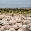 Rounded boulders along the shore.- Otter Point + Otter Cliffs