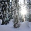 Sun through the trees en route to Mardee Lake.- Mardee Lake Snowshoe