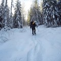 The route to Mardee Lake leads through the trees.- Mardee Lake Snowshoe