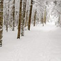 Snowshoeing the trail to Esther Mountain.- Whiteface Mountain + Esther Mountain Snowshoe