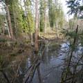 Johnson Creek wetlands off of SW Taylor Street in Merrit Orchard Park.- North Johnson Creek Trail