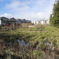 View of the Cedar Mill Wetlands off of the North Johnson Creek Trail.- North Johnson Creek Trail