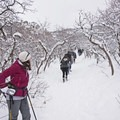 Popular trail.- Ferguson Canyon Snowshoe