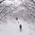 Dogs love this hike in all seasons.- Ferguson Canyon Snowshoe