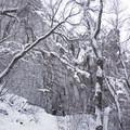 Ferguson Canyon.- Ferguson Canyon Snowshoe
