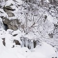 A frozen waterfall in Ferguson Canyon.- Ferguson Canyon Snowshoe