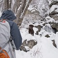 Enjoying Ferguson Canyon in winter.- Ferguson Canyon Snowshoe