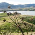 Winter at New Melones.- Heron Point Loop Hike