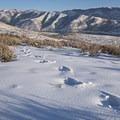 Large set of tracks.- Little Mountain Snowshoe