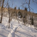Backcountry ski tracks are a testament to the area's popularity with skiers.- Reynolds Gulch Snowshoe
