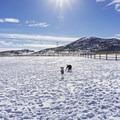 The fenced-in dog run just near the Quinn's Trailhead.- Round Valley Trails, Quinn's Trailhead